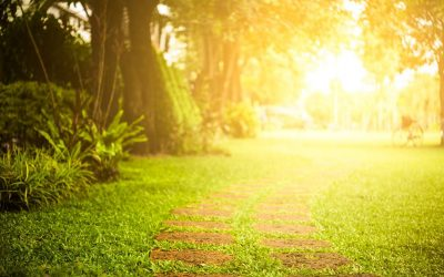 How Can Nature and Sunlight Help Manage Your Emotions